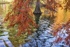 Colores de Otoo (Merly_gon) Tags: otoo atardeceres espaa madrid spain colores arboles tree sony a7 hojas verde amarillo rojo aire libre agua reflejos