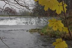 Langenlois (Harald Reichmann) Tags: niedersterreich kamptal kamp fluss wasser strmung herbst nebel wehr landschaft ahorn