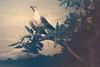 Nature's Greatest (Sun.Child) Tags: pentax me super 35mm lens 35 mm x fujichrome fujifilm fuji velvia50 velvia 50 asa iso exposed exposure under dull dark taxidermy scene india e6 positive po slide film analogue jack redican ginger baker sun child basura