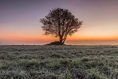 Lone sunrise, Calderdale, West Yorkshire (www.simonhigginbottom.co.uk) Tags: simon higginbottom uk west yorkshire halifax calderdale colour landscape sunrise winter tree lone frost ice mist fog nikon d800 lee filters outdoor field
