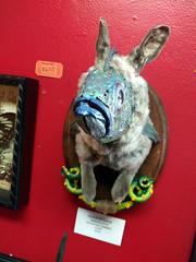 Innsmouth rabbit-rockfish hybrid, Bearded Lady, Magnolia Park, Burbank, California, USA (gruntzooki) Tags: burbank california cali cal ca usa beardedlady magnoliapark junkshop taxidermy roguetaxidermy gaff gaffs chimera