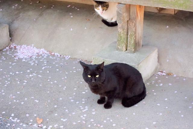 Today's Cat@2012-04-14