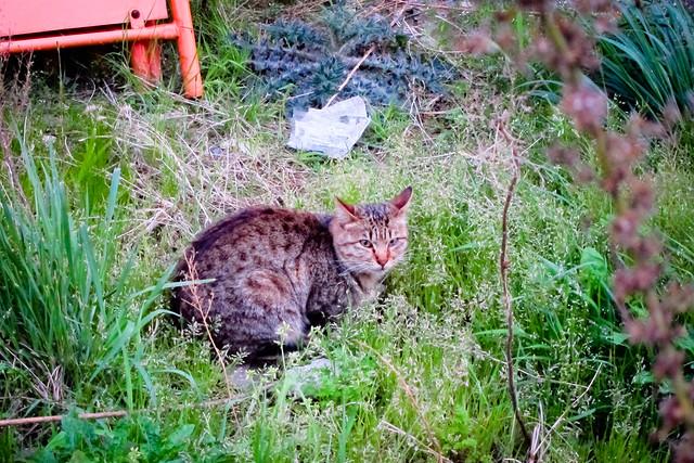 Today's Cat@2012-04-16