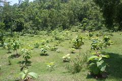 Drop Zone (Yan Arief) Tags: japan wwii gua jepang wisata perang bantul pacificwar seloharjo pundong mrangi