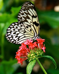 Paper Kite (Penny Hyde) Tags: vertical butterfly shared safaripark