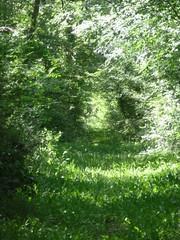 P1000190 (gzammarchi) Tags: strada italia natura sentiero paesaggio ravenna bosco pineta pianura monocrome marinaromea camminata itinerario