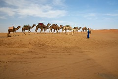 One hundred and twenty nine (Perry McKenna) Tags: sand dunes morocco berber camels touareg day129 merzouga ergchebbi day129365 09may13 3652013 365the2013edition