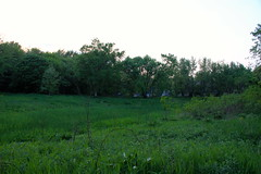 Greens of Lincoln Marsh (danxoneil) Tags: nature marsh wheaton lincolnmarsh wheatonparkdistrict