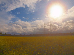 big sun over rapefieldP5230754 (hlh2108) Tags: sky sun nature rain clouds germany landscape natur may himmel wolken gelb raindrops blau landschaft sonne powerstation regen sonnenstrahlen sunbeams rapsfeld rapefield strommaste