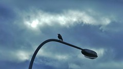 Farewell to Crow ~ Explore #176 (Theen ...) Tags: sky cloud storm sad zoom streetlamp teacher farewell adelaide contact crow goodbye favourite missed admin sorely theen scavchal