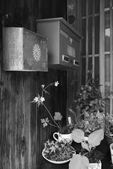 Entrance - 飯福田寺 (Junko S. Photography) Tags: bw sigma merrill foveon dp1 dp1m dp1merrill