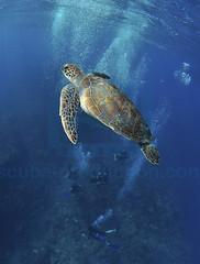 2012 07 METTRA OCEAN INDIEN 0018