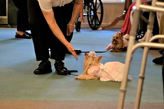 DSC_0107 (vweida) Tags: pets dogs pittsburgh therapy therapydogs kctclub