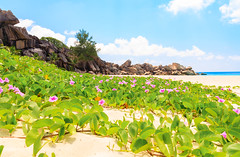 Grand Anse,La Digue,Seychelles (Hughie O'Connor) Tags: beach rocks exotic granite tropical wildflowers seychelles grandanse ladigue