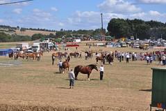 DSC_0225 (- MB Photo -) Tags: de cheval des 09 labour concours 07 vache tracteur vaches chevaux bourg comice agricole comptes 2013 bourgdescomptes |labourer