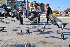 Feeding Pigeons (Bob Hawley) Tags: people birds turkey pigeons istanbul beyoglu streetscenes taksimsquare nikon24f28 nikond300
