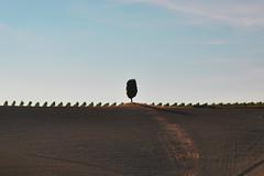 l'irriducibile (iana) Tags: toscana terra valdorcia colline cipressi