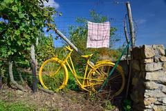 Yellow bike in vineyard (kewl) Tags: bike bicycle yellow cycling vineyard towel lorraine europeanunion moselle d64 hautekontz francemétropolitaine thionvilleest