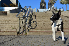 Erwischt! (TagThis) Tags: dog stairs cologne kln treppe hund