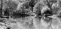 The Pool XXXVIV (Joe Josephs: 2,600,180 views - thank you) Tags: newyorkcity blackandwhite spring centralpark springtime blackandwhitephotography travelphotography nikon18028d joejosephs joejosephsphotography copyrightjoejosephsphotography nikon800e copyrightjoejosephs2014