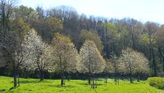 Spring! (janneman2007) Tags: netherlands canon landscape spring nederland lente landschaft limburg landschap frhling niederlande canon600d janneman2007