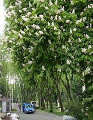 spring in Topkapi Palace (jenny_guo) Tags: travel tree green turkey spring istanbul lx100