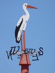 Stork! (cyclingshepherd) Tags: blue chimney sky bird portugal weather fauna island may algarve vane isla ilha stork olhao olhão chaminé 2015 armona cyclingshepherd dmctz60