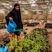 Watering the plants, Hargeisa