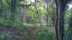 Mill Piece, Conisbrough. (Sharon B Mott) Tags: trees woodland southyorkshire conisbrough sonyxperiaz3 millpiece