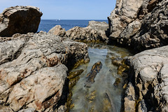 Rock pool algae and sea beyond (PChamaeleoMH) Tags: algae caladesmuertes menorca puntagrossa rockpools