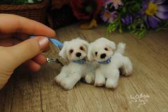 goober14 (Zhanna Zolotina) Tags: miniature dog ooak handmade toyzz tinydolhousetoyzz altair teddy bear dollhouse puppenhaus blythe