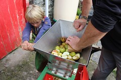 Scratting Apples with a scratter 4 (Local Food Initiative) Tags: permaculture apple day apples press pressing cider group sustainable orchard scrat scratting crusher scratted pulper