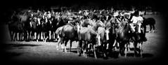 Muchas tropillas (Eduardo Amorim) Tags: cavalos caballos horses chevaux cavalli pferde caballo horse cheval cavallo pferd cavalo cavall tropilla tropilha herd tropillas tropilhas 馬 حصان 马 лошадь crioulo criollo crioulos criollos cavalocrioulo cavaloscrioulos caballocriollo caballoscriollos ayacucho provinciadebuenosaires buenosairesprovince argentina sudamérica südamerika suramérica américadosul southamerica amériquedusud americameridionale américadelsur americadelsud eduardoamorim gaucho gauchos gaúcho gaúchos