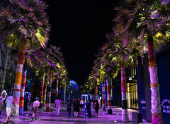 The Palm Trees (amirdakkak1) Tags: people live life city public urban trees palm dubai uae dxb architecture outdoor environment nature modern night photography color family colour colours new symmetry