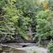 0800 Robert H Treman State Park