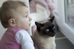 Friendship (proefdier) Tags: baby cat cute cutie feline freundschaft friendship girl kater louis madchen siamese