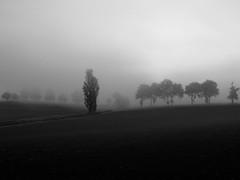 Matin de brume (Gers) (@phr_photo) Tags: paysage landscape blackwhite mist brume morning automne autumn campagne land minimalisme minimalism