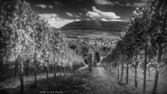View from vineyard of Metzingen - III (KF-Photo) Tags: 169 albenvorland fluchtlinie metzingen schwbischealb verfrbungen weinberg