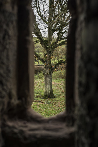 tree through a window