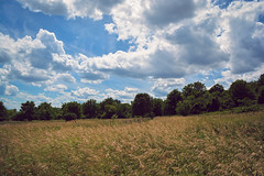 Summer Fields (anthony_wan) Tags: field windy summer sky wheat sunny day scarborough bluffs escarpment toronto ontario canada bright sun outdoor trees nikon d5200 breeze wind landscape cloud wild