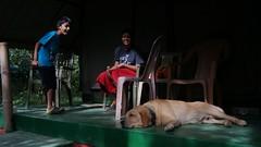 (gcmenezes) Tags: tracii marxall menezes deep jungle resort tamil nadu rocher dog pet shalini tent