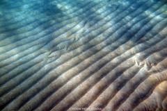 IMG_0007 copy (Aaron Lynton) Tags: lyntonproductions ocean turtle starfish maui hawaii canon g1x
