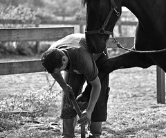 Pedicure & elegance (Pics4life.nl off and on next week) Tags: horse pedicure elegance paard hoefsmid nederland zwart wit man nagelvijl wageningen frank ruin fence vakman ambacht weide elegantie elegant