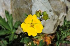 Flowers on Mount Rainier Hike (Bonnie Ott) Tags: amazing variety abundance mountrainiernationalpark washingtonstate