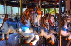 Carousel Ponies (billackerman1) Tags: hdr merrygoround