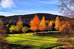 Autumn light Kingussie (Fr Paul Hackett) Tags: kingussie sunshine autumn golfcourse