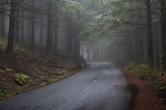 Mystery Road (Aymeric Gouin) Tags: madère madeira portugal foret wood arbre tree mood ambiance mist brume pine road route travel voyage landcspa paysage landschaft paisaje outdoor europe olympus omd em10 aymericgouin aymgo light lumière