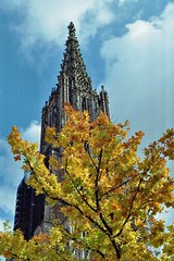 Late Autumn ,City of Ulm (hansottoschttle) Tags: architektur gold200 herbst kirchturm kathedrale