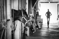 (Jen MacNeill) Tags: blackandwhite bw horse stable farm equestrian thoroughbred equine bokeh