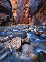 Three Little Leaves (killersnowman) Tags: zion narrows canyon river virgin alpa glow fall cottonwood longexposure leaf leaves rock creek utah red blue